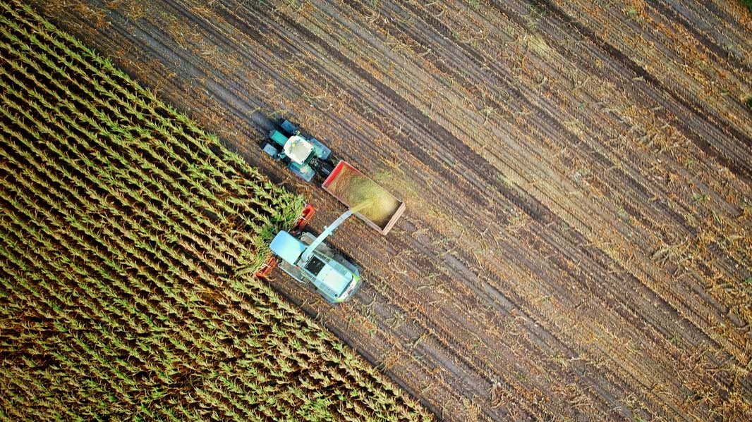 drone cane harvesting