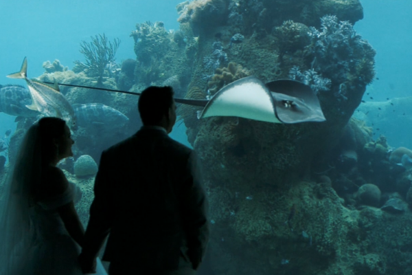 Day Dream Island underwater observetory